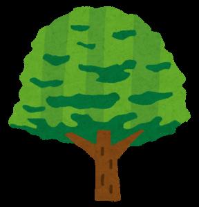 tree_keyaki